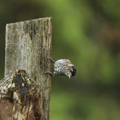 A Observação de Aves pode ser agendada diretamente no hotel que você está hospedado.Verifique o site Rota das Araucárias.