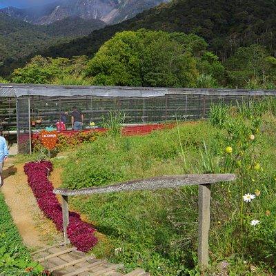 Mesilau Strawberry Farm