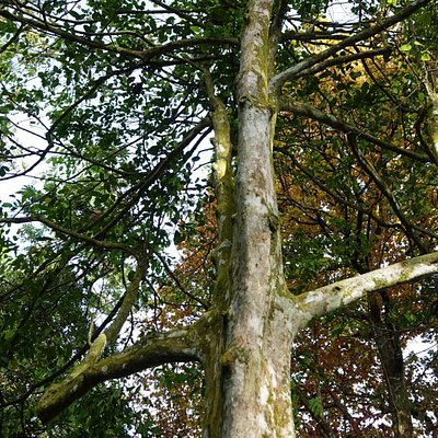 Square Trunks and elbows on this Tolkien-esque square tree!  This one guards the other square trees in the area.