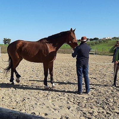 A.S.D Cavallo Amico