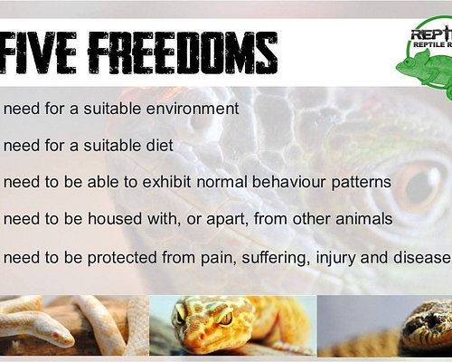 The five freedoms we follow