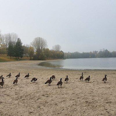 Badestrand Vogelstang See