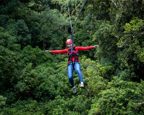 Flying through ancient native forest on the Original Tour