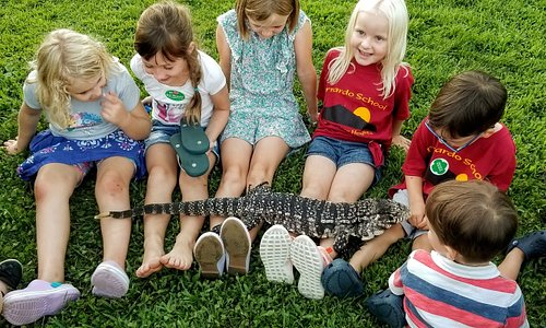 Tegus Tickle! Beethoven the Black & White Argentine Tegu visits with a group of children.