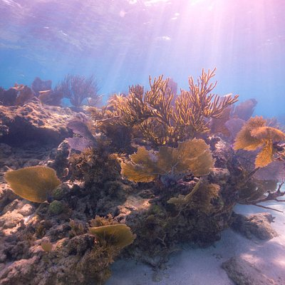Carysfort Reef