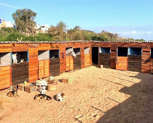 Les écuries de Cheval Essaouira