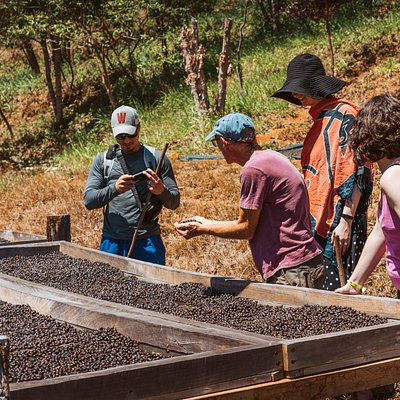 Owner, Don Howie, describes the drying and sorting process at Cafetal Santa Rosa. Howie still does everything by hand. He and his employees hand check every bean, if it isn't red, and perfect, it won't make the grade (unlike the beans we get at Starbucks).