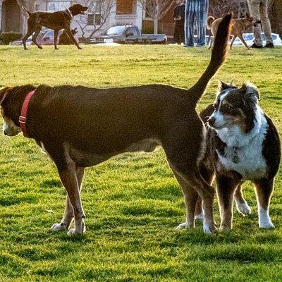 Always fun to meet new friends at Ventura's Cemetery Memorial Dog Park.