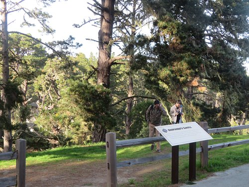 Huckleberry Hill, 17 Mile Drive