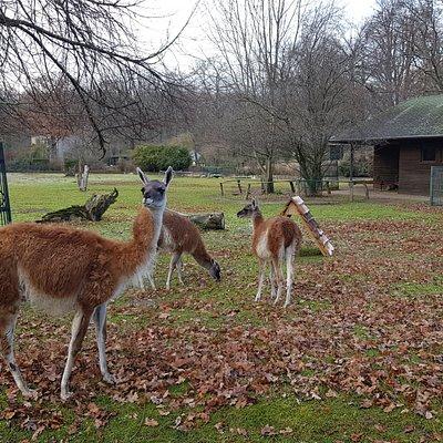 Tierpark Dessau.