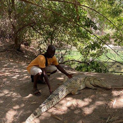 Crocodile park in Bakau