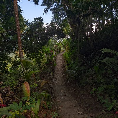 Part of our rainforest trail