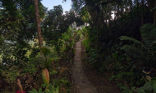Part of our rainforest trail