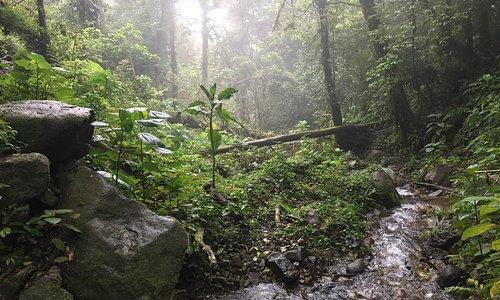 Hiking through creek-bed