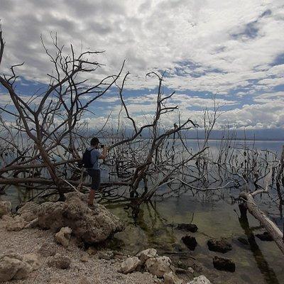 Экскурсии из Сосуа и Пуэрто-Плата Озеро Энрикильо с крокодилами)