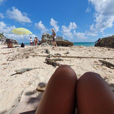 playa con iguanas