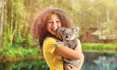 Koala cuddles in Corroboree