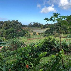 view across organic farm at Grand Eden Estate