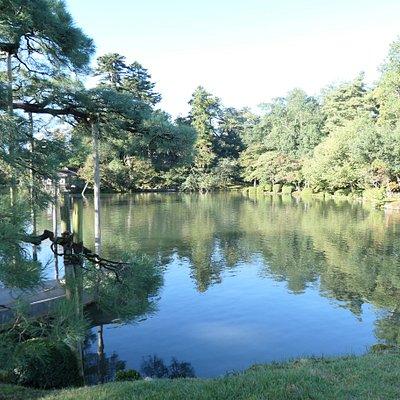 樹齢170年と推定される見事なものでした。背後の霞ヶ池と合わせて美しかったです。