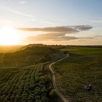le Domaine de Soustres sur la colline d'Ensérune au lever du soleil crédit photo @julien Goldstein