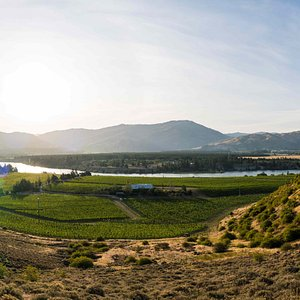 Our Bald Hills vineyard in Bannockburn, Central Otago (note our Cellar Door is not located at our vineyard)