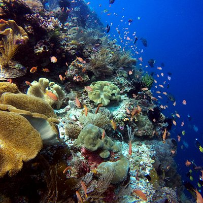 Atauro's host the world's most biodiverse reefs, in a 2016 study by Conservation International.