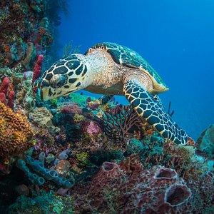 Turtle- Shark Shoal