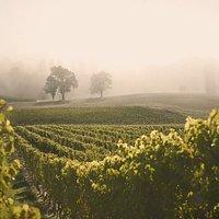les vignes de La Cave de Genève