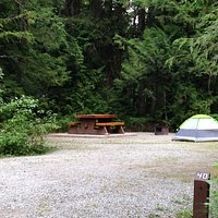 Forested camping sites