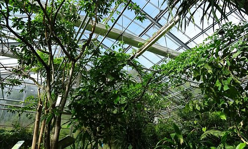 Serres tropicales : espace forêts tropicales humides.