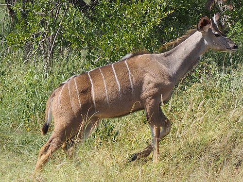 Mfafa Safaris