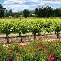 Spring at our winery, where we look out at Betty's Vineyard and Mount St. Helena.