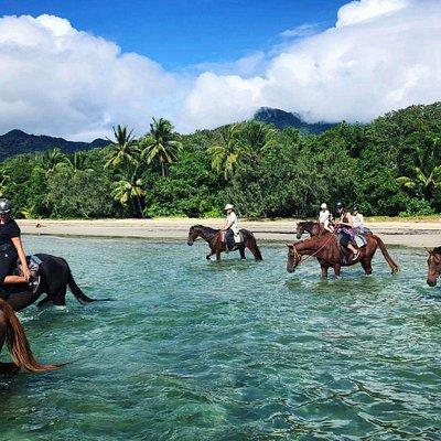 Beach Horse Ride along Myall Beach, Cape Tribulation.