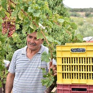 Sinadinakin Evangelos the producer of SInadinakis wines
