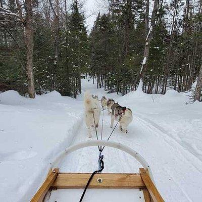 Randonnée traîneaux à chiens uniquement en forêt