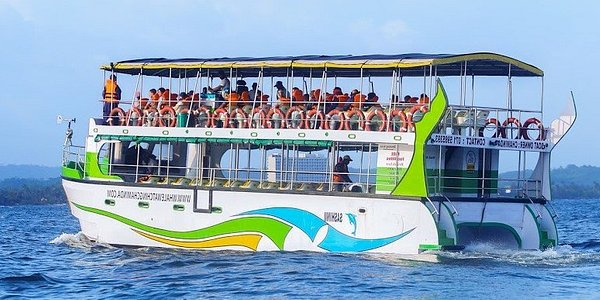 Most Comfortable Whale Watching Cruiser
