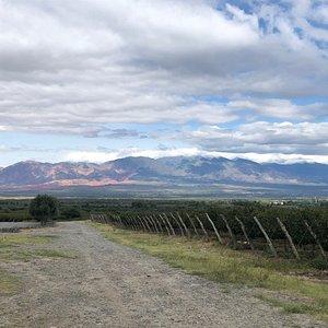Viñedos de suelo árido y con drenaje, altura extrema, amplitud térmica, clima seco: buenas uvas