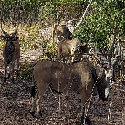 That is the Safari done at fathala park at senegal