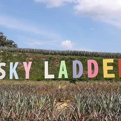 acenic view of Sky Ladder Pineapple Farm