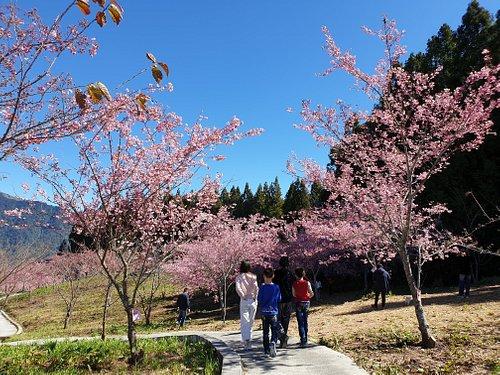 千櫻園生態景觀園區