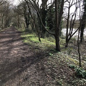 Ebury Way, Canal views and Croxley Common Moor