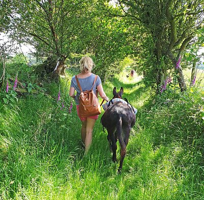 Have a quiet walk through beautiful countryside in the company of a little miniature donkey who will carry your picnic.
