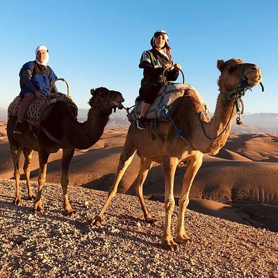 Camel ride in desert of agafay marrakech