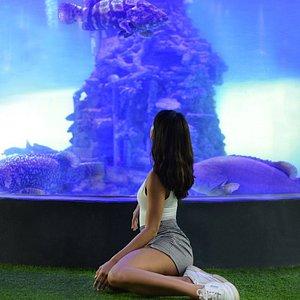 """ Underwater world "" . FlowerLand Pattaya : ฟลาวเวอร์แลนด์ พัทยา A new landmark in Pattaya"