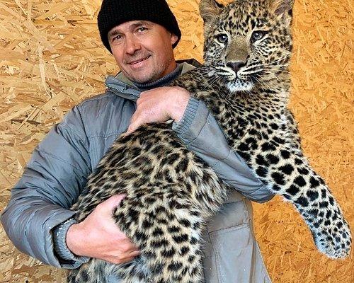 Леопард Аиша
