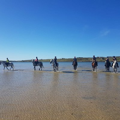 Some of the equine,.canine amd human team at Connemara Equestrian Escapes
