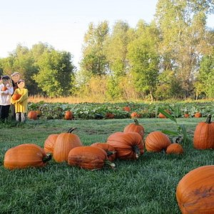 Pick your own pumpkins from the pumpkin patch or from in front of the apple barn
