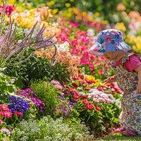 Toowoomba Carnival of Flowers Laurel Bank Park