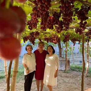 Climasenrose Grape Farm is very accessible for tourist. It's located along the national highway, northside of DSWD-RRCY La Union and opposite of Barangay Urayong, Bauang, La Union Hall. Their vines are really robust and bears a lot of fruits. The staff are friendly. Kudos to the Climasenrose Grape Farm Team!