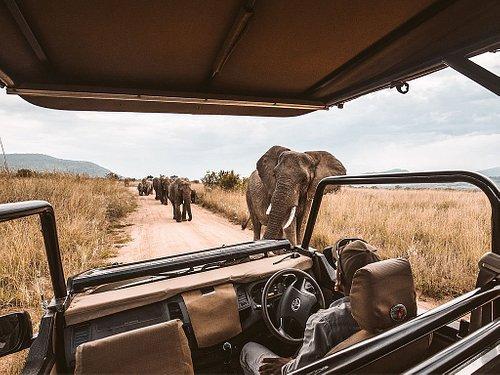 Safaris offer close-up animal encounters